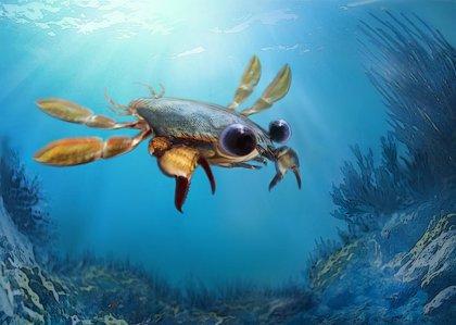Fósiles desconcertantes obligan a repensar la definición de cangrejo
