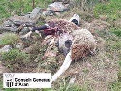 L'os Goiat ataca una ovella i una cordera al Baish Aran (ACN)