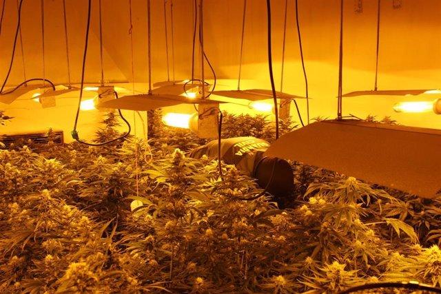 Granada.- Sucesos.- Diez investigados en una nueva operación por cultivo de marihuana en Pinos Puente