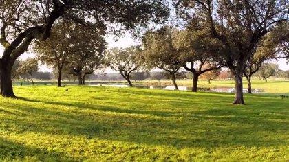 La Junta recibe 212 solicitudes de las ayudas para el fomento de una economía verde y circular en explotaciones agrarias
