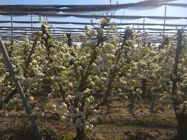 Zaragoza.- Los retos de la vigilancia fitosanitaria en la agroalimentación, a debate en Ibercaja Patio de la Infanta