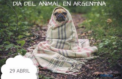 29 de abril: Día del Animal en Argentina, ¿qué se celebra en esta jornada?