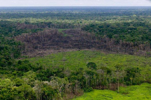 Colombia.- Colombia lanza un plan para contener la deforestación de bosques y selvas