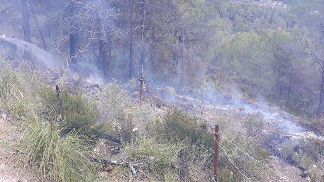 Sucesos.- Extinguido un incendio forestal en el Coll de sa Creu