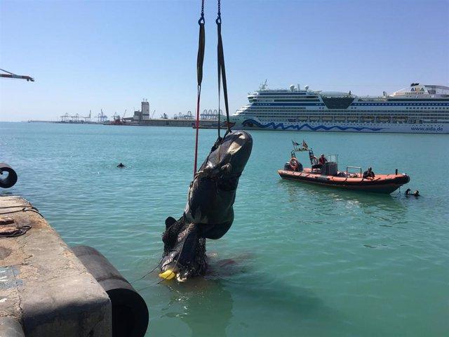 Valencia.- Sucesos.- Un ferri choca con un cachalote y arrastra sus restos hasta la dársena del puerto