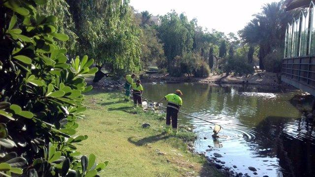 El Ayuntamiento de Murcia realiza la limpieza de los principales lagos de Murcia