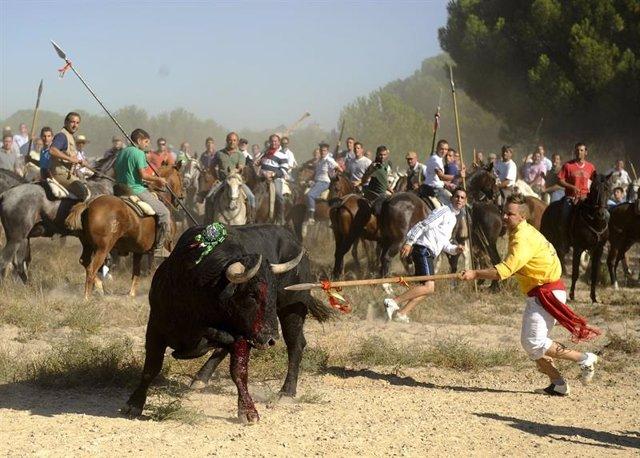 El Suprem inadmet el recurs contra el decret de la Junta que va prohibir la mort del Toro de la Vega