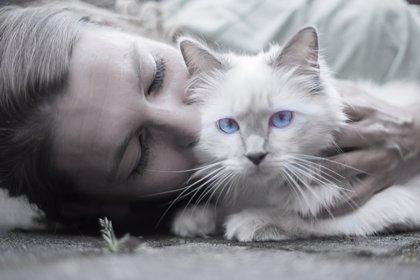 3 de mayo: Día Mundial de Abrazar a tu Gato, ¿qué beneficios tiene?
