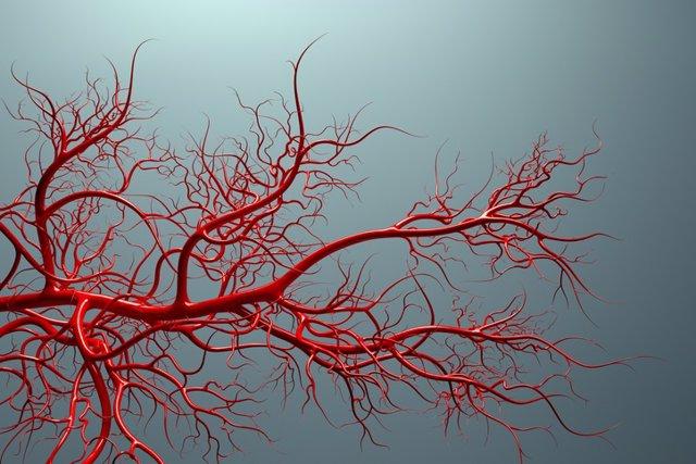 Investigadores españoles identifican un nuevo mecanismo que puede ayudar a la formación de vasos sanguíneos