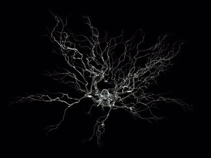 Identifican un nuevo mecanismo de señalización de los circuitos neuronales