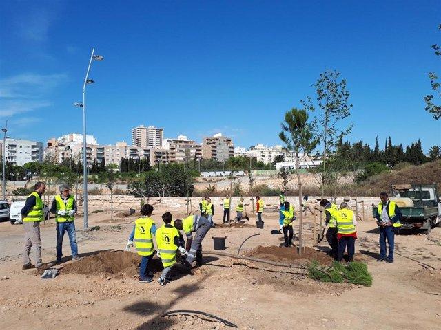 Vecinos de Palma participan en la siembra de árboles en el bosque urbano del canódromo