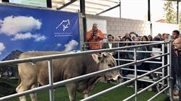 Agro.- La Escuela Agraria del Pirineo acoge el Centro de Testado de las razas autóctonas vacunas catalanas