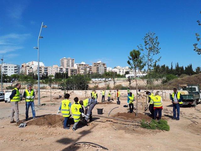 Veïns de Palma participen en la sembra d'arbres en el bosc urbà del canódromo