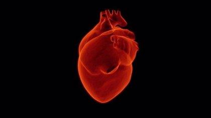 ¿Dónde se encuentran las células madre en el corazón?