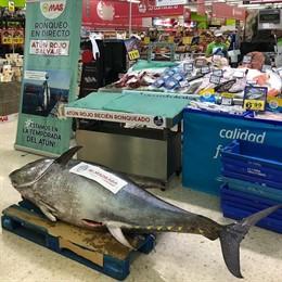 Sevilla.- Grupo MAS mostrará a sus clientes más de un centenar de ronqueos con atunes de almadraba