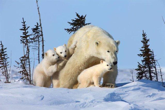 Amenaza a la biodiversidad del Ártico