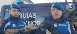 Sucesos.- Rescatados cinco perros en muy mala situación en la Cañada Real