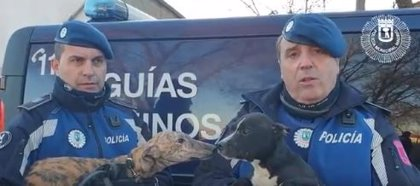 Rescatados cinco perros en malas condiciones en la Cañada Real