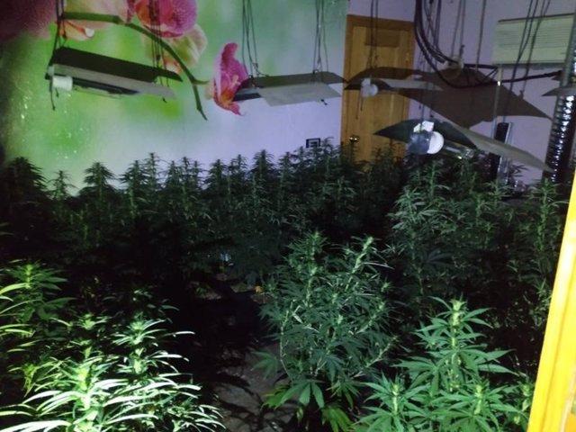 Córdoba.- Sucesos.- Detenido un varón tras intervenirle 112 plantas de marihuana en un local alquilado para peluquería