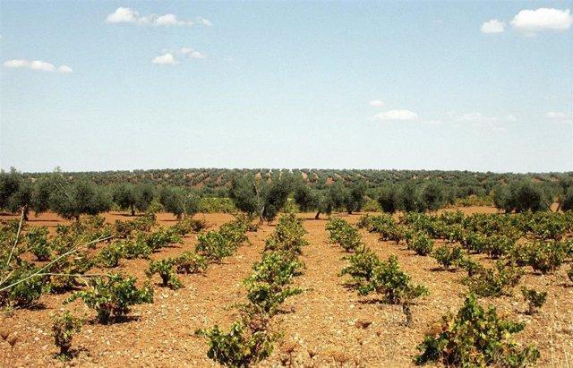 CaixaBank impulsa en Fenavin la internacionalización del sector vitivinícola