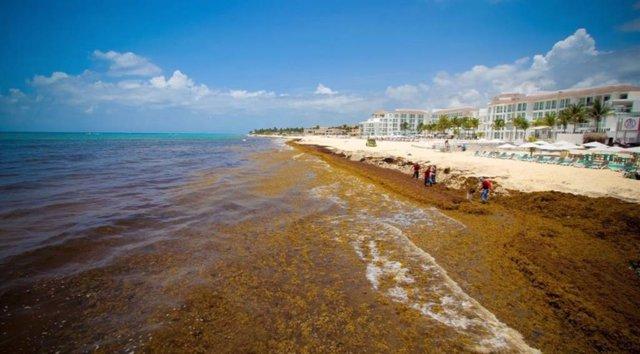 México crea un grupo trabajo para atender la crisis de las playas del Caribe por la llegada masiva del sargazo