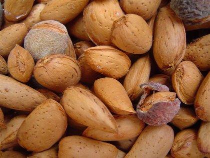 Tomar frutos secos durante el embarazo mejora el desarrollo neuropsicológico del bebé