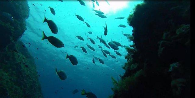 La isla del Toro, el punto de muestreo con mayor biomasa de los 36 puntos estudiados en las reservas marinas de Baleares