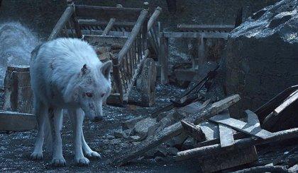 El director de Juego de tronos justifica la fría despedida de Jon Snow a Fantasma