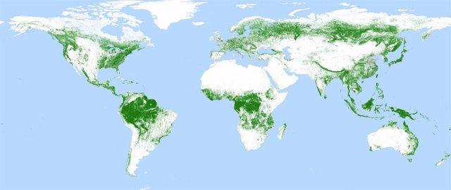 Un satélite alemán produce un mapa global de bosques a resolución de 50 metros