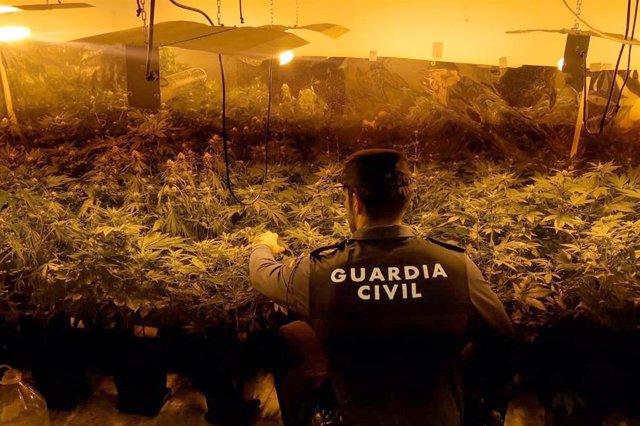 Jaén.- Sucesos.- Desmanteladas cuatro plantaciones de marihuana en viviendas de la Puerta y Puente Génave