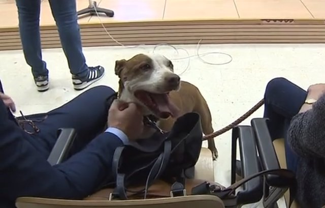 Trib.- Citan a una perra como testigo en un juicio por su propio maltrato en Tenerife