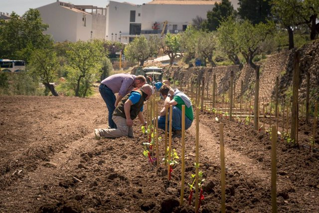Turismo.- Un proyecto enológico recuperará patrimonio agrícola y arquitectónico de la Vall de Guadalest (Alicante)