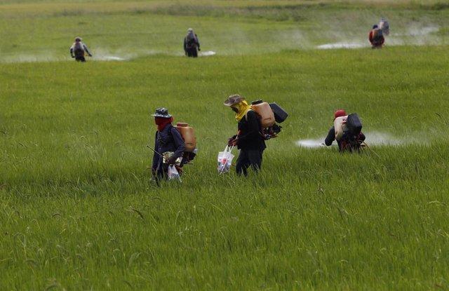 Granjeros utilizan pesticidas