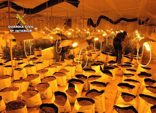 Guardia Civil desmantela una plantación de marihuana en una nave industrial de Albudeite