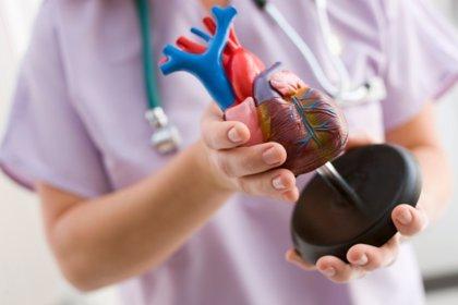 Consiguen regenerar el corazón de un cerdo después de un infarto de miocardio