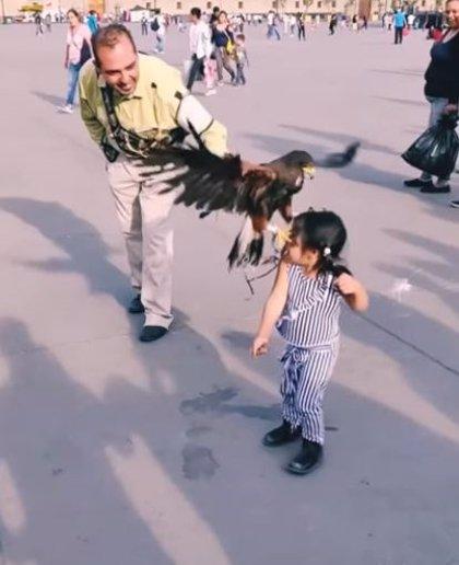 Un águila ataca a una niña en Zócalo (México) y su madre se burla