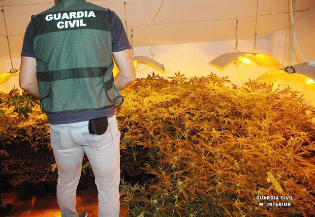 Detendidos tres vecinos de Vizcaya y desmantelada una plantación de marihuana con cerca de mil plantas en Arroyo