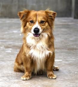 Cerca de 40 perros abandonados rescatados por AUPA desfilarán el domingo 19 en Bioparc para ser adoptados