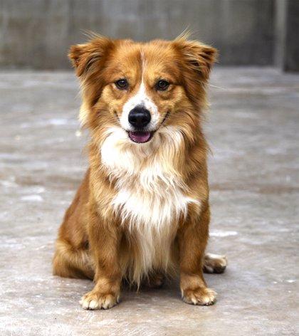 Morena propone en el Congreso penas de hasta 6 años de cárcel por robar mascotas