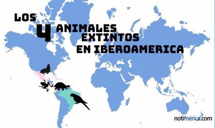Los 4 animales que han desaparecido en Iberoamérica durante los últimos 20 años