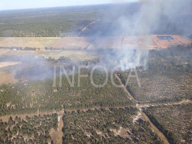 Huelva.- Sucesos.- Extinguido el incendio forestal de Almonte que ha afectado a tres hectáreas