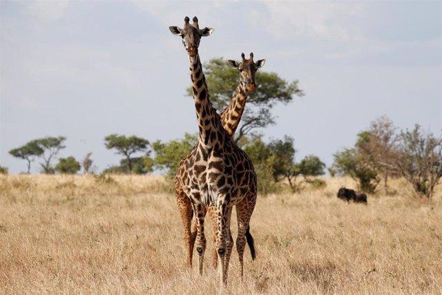 Tanzania.- Tanzania subastará 26 cotos de caza para combatir la corrupción en la industria turística