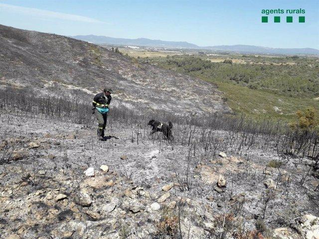 Sucesos.- Un incendio en Montferri (Tarragona) calcina 16,3 hectáreas de bosque
