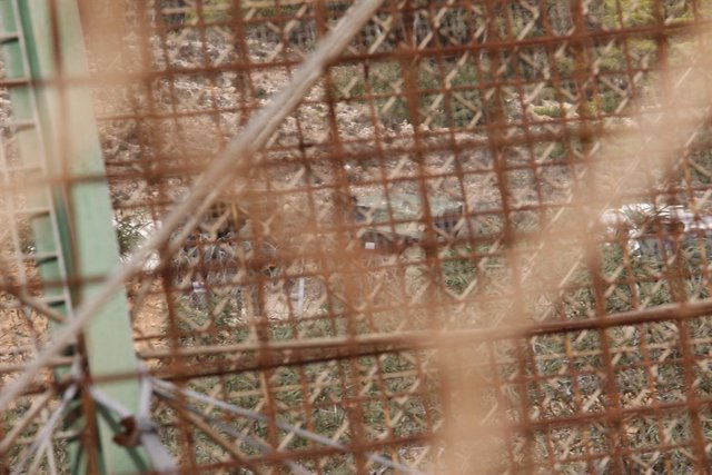 Set immigrants salten el clos fronterer de Ceuta i cinc resulten ferits amb corts per les concertinas