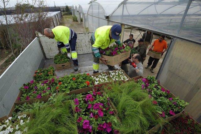 Más de 70 ayuntamientos recogen las flores que lucirán en sus municipios en una nueva campaña de la flor de la DPH