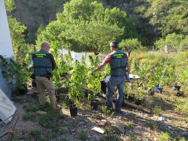 Almería.-Sucesos.-Detenido un joven holandés con 120 plantas de marihuana cultivadas en un alojamiento turístico rural