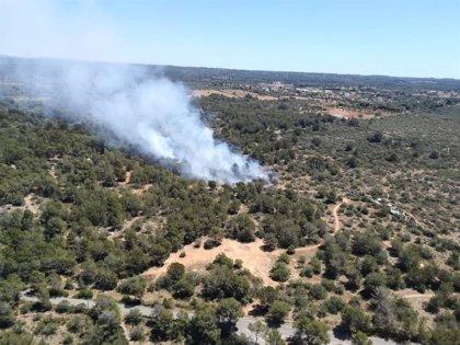 Declaren estable l'incendi forestal de Son Verí (Mallorca)