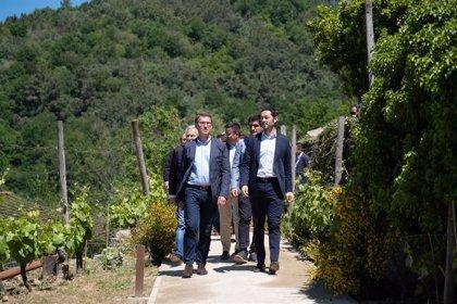 Feijóo constata el potencial de crecimiento del sector vitivinícola y anima a seguir impulsando el futuro rural