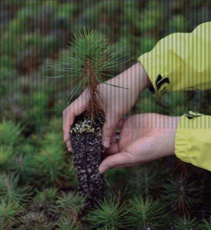 Endesa recibe la certificación del Gobierno que reconoce que calcula, reduce y compensa su huella de CO2