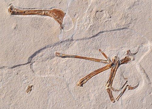 El trono de Archaeopteryx se tambalea